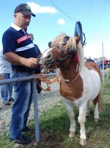 gradiska01 mustafa suhonjic ima konje rase poni