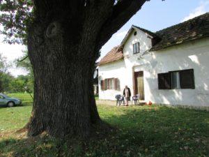Derventa 02 Hrast i kuca Ljubice Panic ispod stabla foto Milan Pilipovic