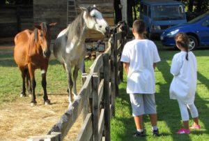 gradiska-08-deca-najvise-vole-konje-foto-milan-pilipovic