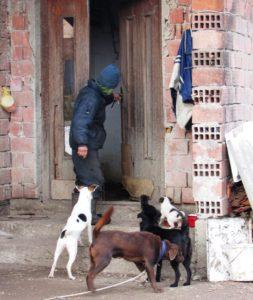 gradiska-02-psi-cekaju-pred-vratima-foto-milan-pilipovic