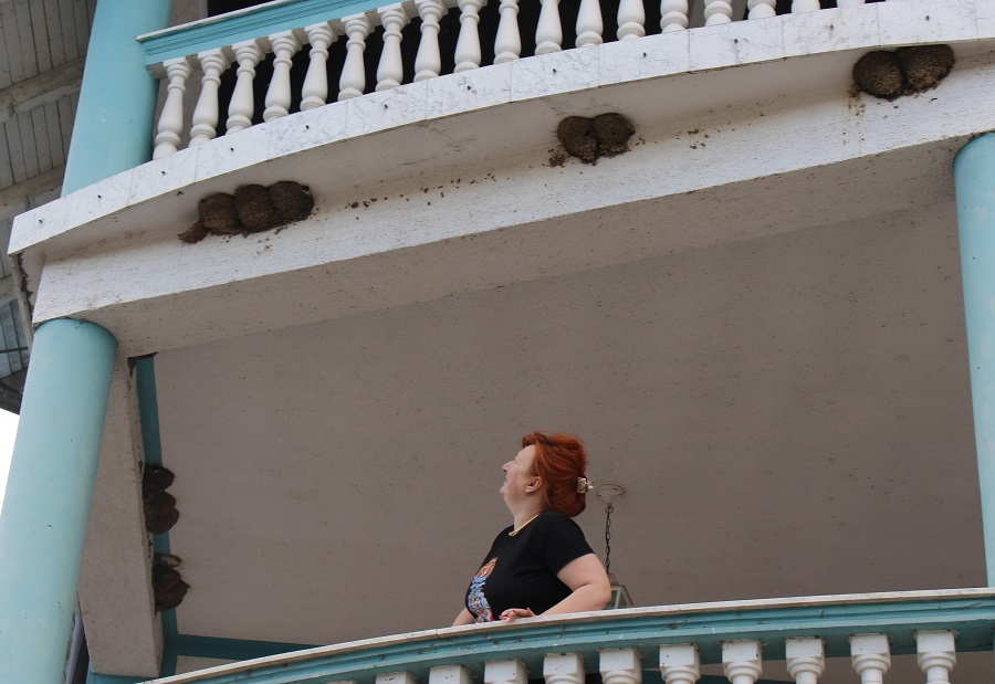 Biljana dijeli kuću sa LASTAMA: Na terasama 76 gnijezda i STOTINE PTICA
